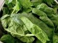 crepes-ricotta-e-spinaci05