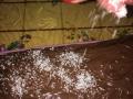 mattonella-cocco-e-nutella06