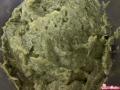 pesto-di-asparagi-10